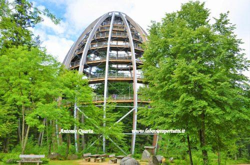 """La foresta bavarese (""""Bayerischer Wald"""")"""